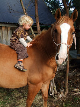 I have trust in my gently horses and I have a brave little grandchild! The horse looks kind!