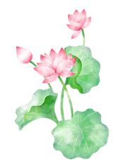蓮の花と広島市民葬儀