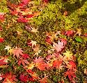 紅葉と広島市民葬儀