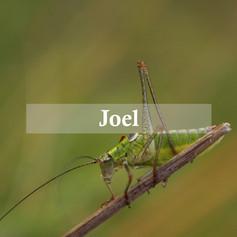 Joel 2016
