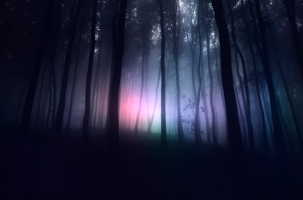 Paranormal Forest
