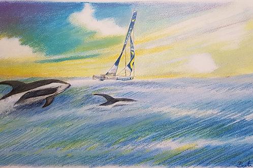 """Vendée Globe """"La Compagnie du Lit"""" Clément Giraud et les dauphins de Commerson"""