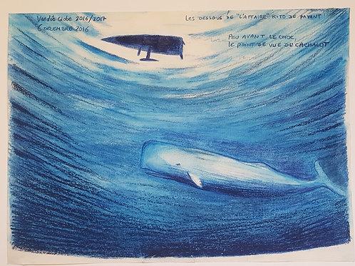 Vendée Globe 2016, dessin original  le point de vue du cachalot, sous le bateau de Kito De Pavant