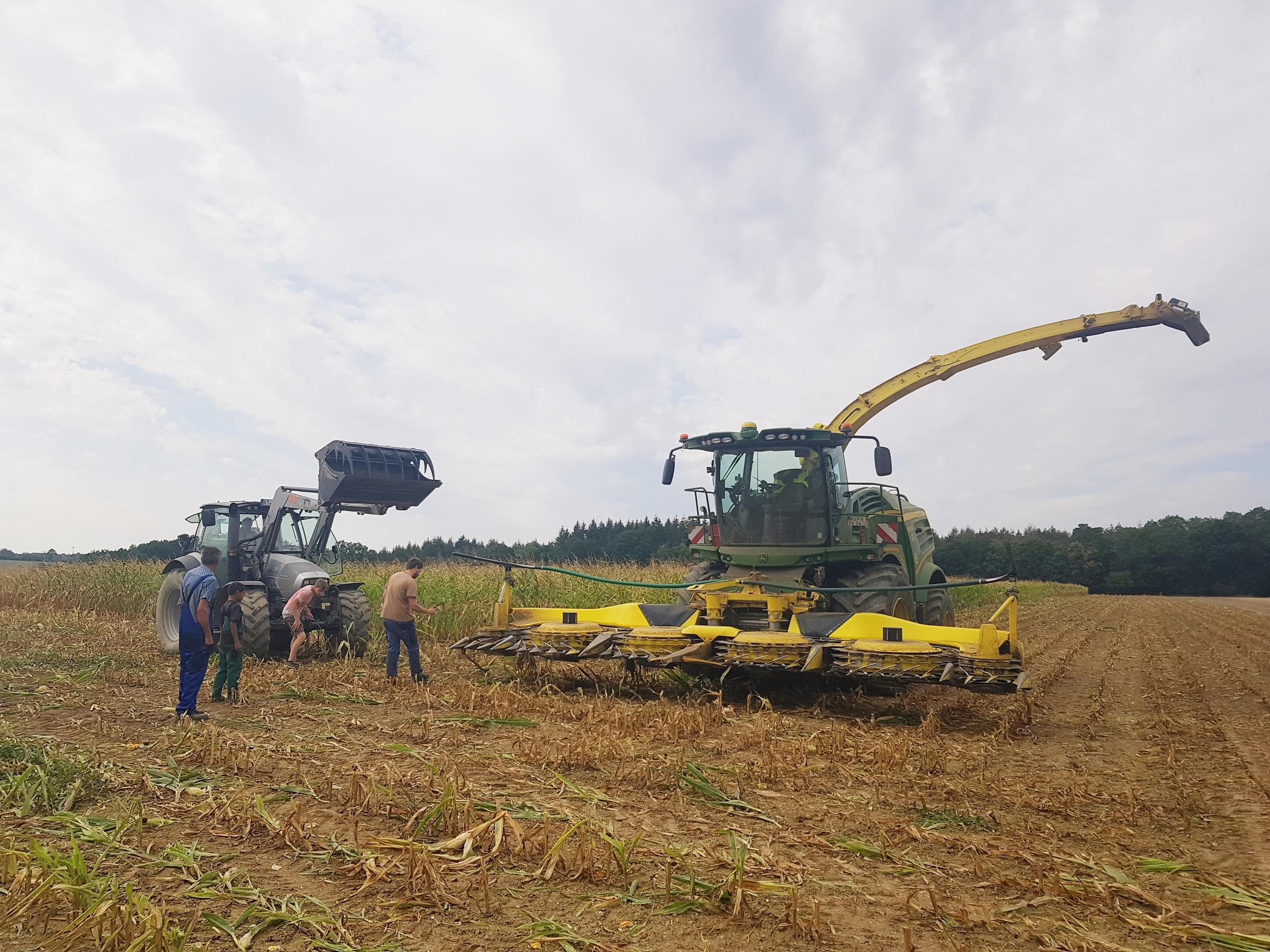 Corn Sensory Bin for Kids - Fall Fun on the Farm