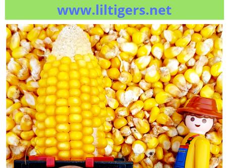 Corn Sensory Bin for Kids