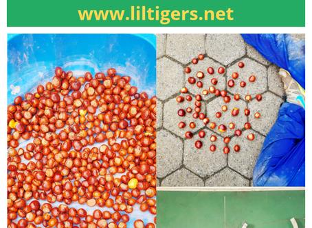 DIY Chestnut Activities for Kids