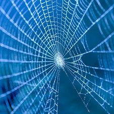 cobweb image.jpg