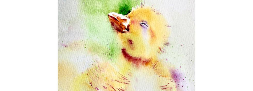 sunshine duckling web.jpg