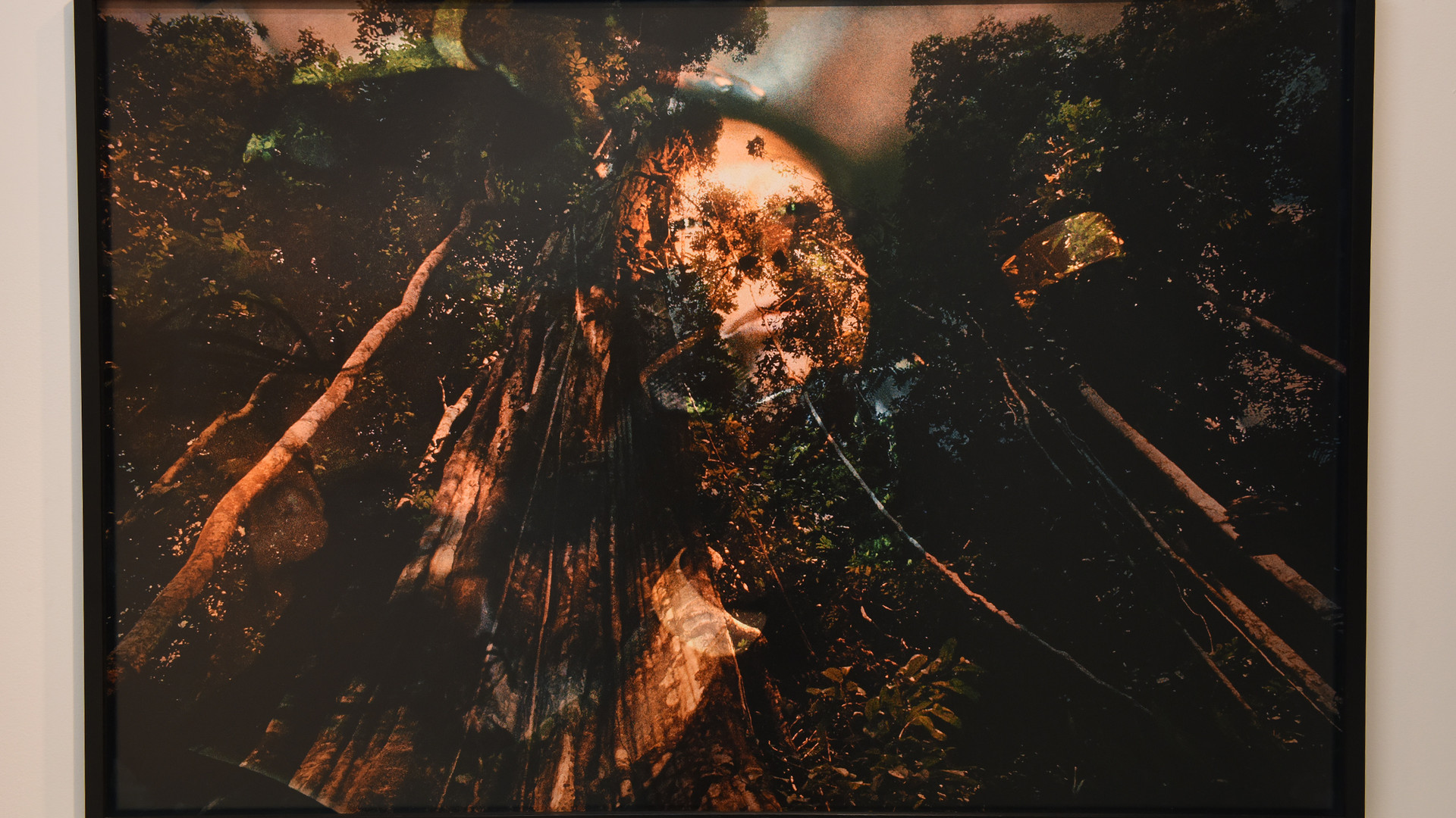 CLAUDIA ANDUJAR Floresta Amazônica, Pará (Série Sonho Yanomani) | 1971 Fotografia impressão com tinta pigmentada mineral sobre papel Canson BFK Rives 310 gr 66 x 99 cm Coleção particular