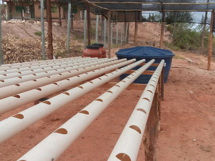 Água Viva inicia projeto de Aquaponia