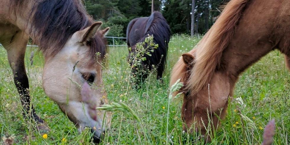 FULLT!! Rid hem hästarna från betet