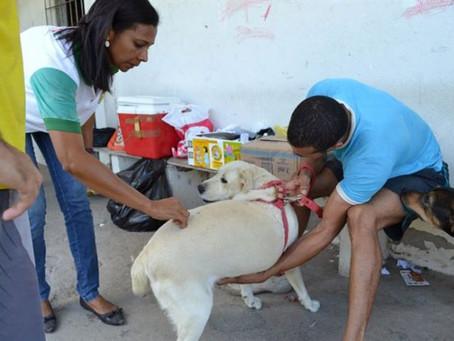 Centro de Zoonoses vacina cães e gatos nas Baraúnas, neste sábado (16)