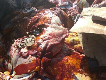 Operação apreende 1,5 tonelada de carne adulterada na Bahia