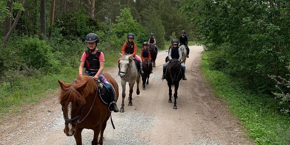 Rida hästarna till bete