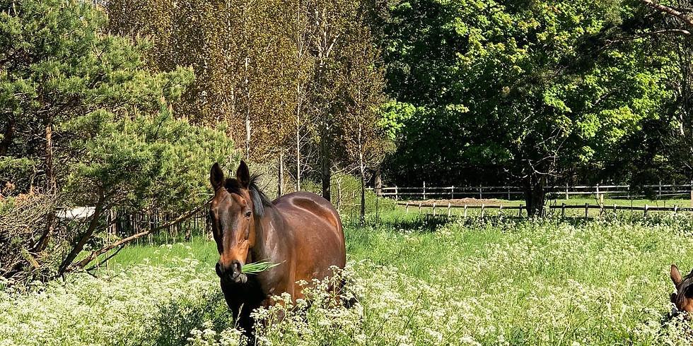 Rida hästarna till betet