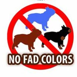 No Fad colors.JPG