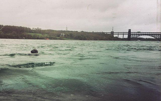 Seal at Menai
