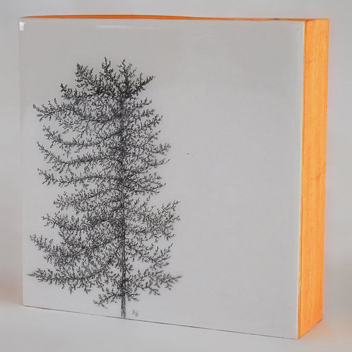 Evergreen Series