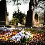 graveyard-1417871_1920_edited.jpg