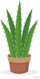 cactus-illustration.png