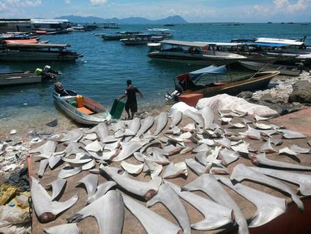 Sharks Are Not Tasty - Stop Killing Them