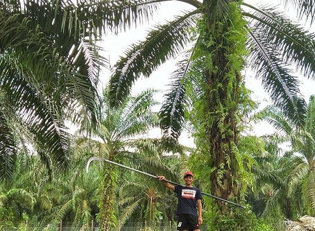 Mohd Hairael Jimlee, Chairman of CSPOC (Certified Sustainable Palm Oil Committee) Sangau Village, Ki