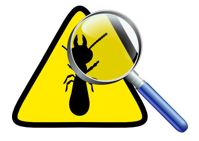 Tout savoir sur le diagnostic termites par IMMONORD77
