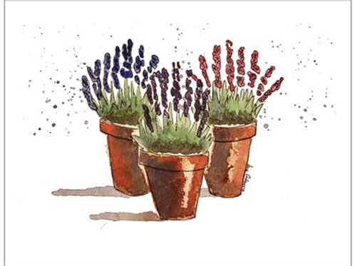 Three Pots of Lavender Note Card Set of 10