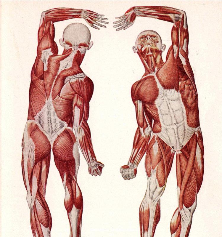 Анатомия, физиология, биомеханика.