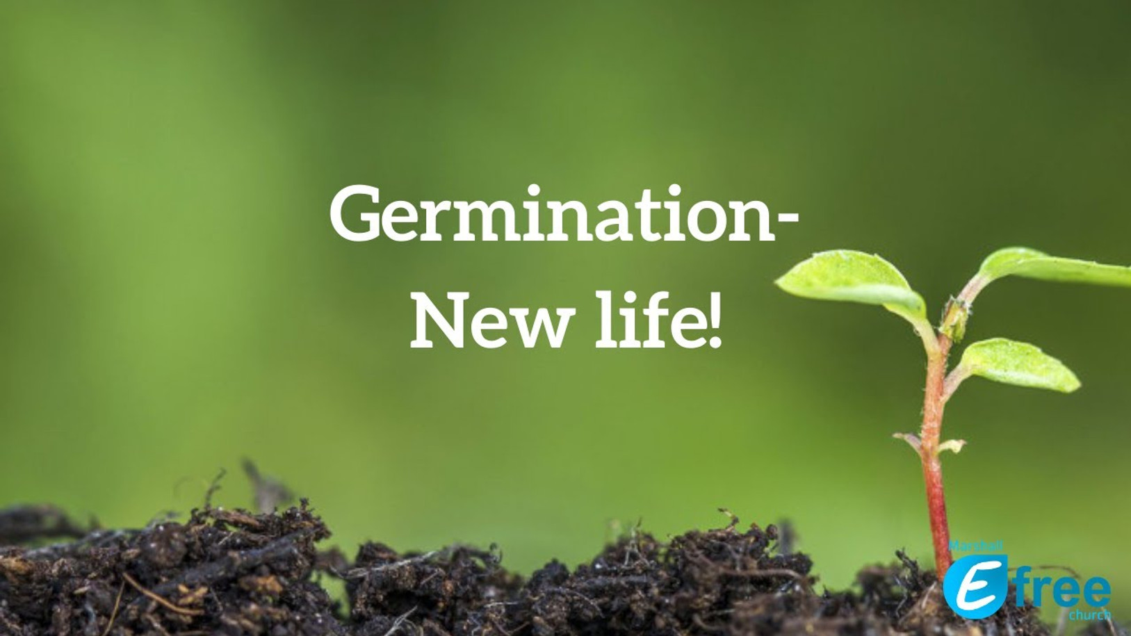 Germination - New life!
