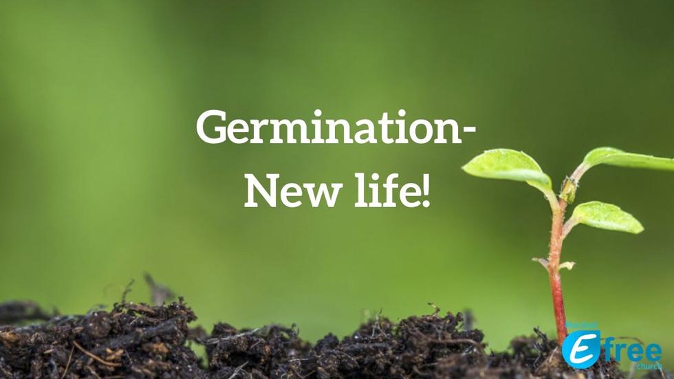 Germination - New life!