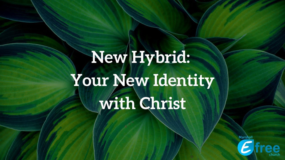 New Hybrid: Your New Identity with Christ