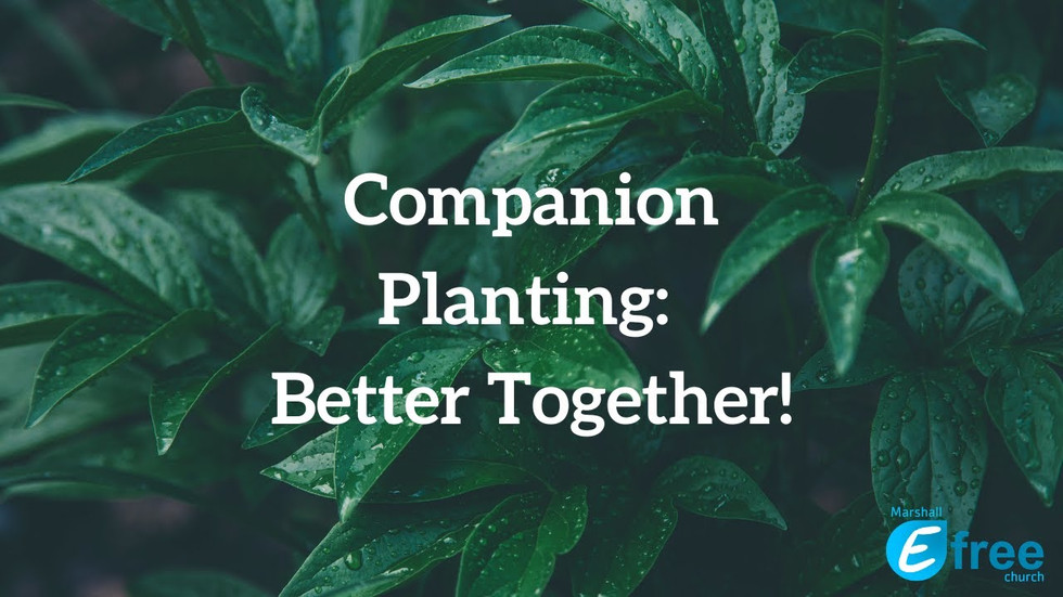 Companion Planting: Better Together!