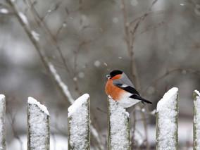 Что делать в саду зимой?