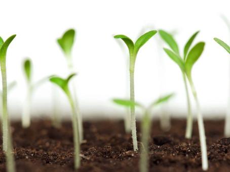 Как разбудить семена?