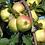 Thumbnail: Яблоня Крупноплодная (Естественный карлик)