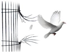 Magyarország: kalitka vagy végromlás? Tisztelt Olvasó!