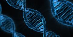 """Félmilliós kutatás: megint bebizonyosodott, hogy nincs """"meleg gén"""""""