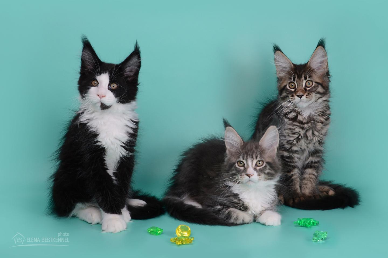 trio (1)