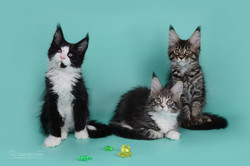trio (2)
