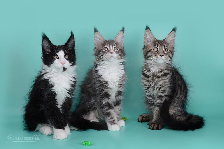 trio (4)