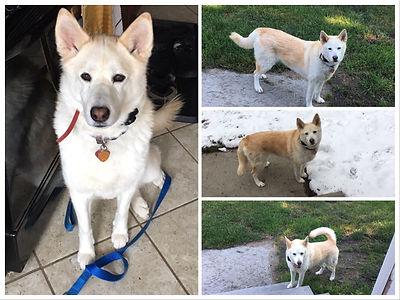 Dog walking and backyard play, Maya