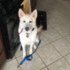 dog walking client Maya