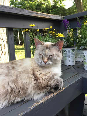 Chloe cat client