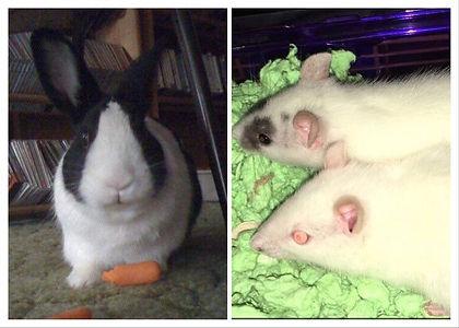 Christopher rabbit, rats