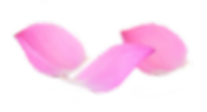 pétales_de_lotus_sans_fond.png