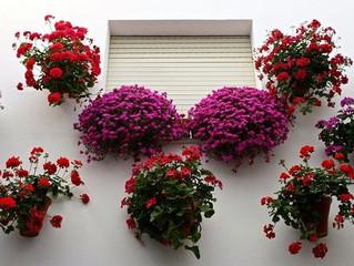 Cidade espanhola lança competição de vasos nas janelas