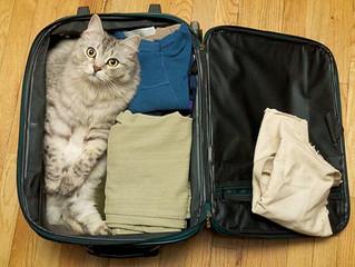 Dicas para ter uma viagem de carro tranquila com seu gato