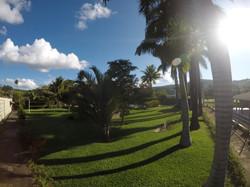 jardim palmeiras piscina