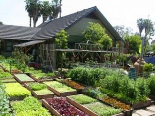 6 Dicas práticas para fazer Horta caseira em casa ou no sítio!